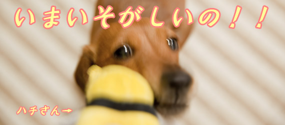 Akane_0524