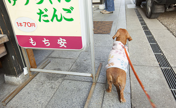 Nagahama12_04a