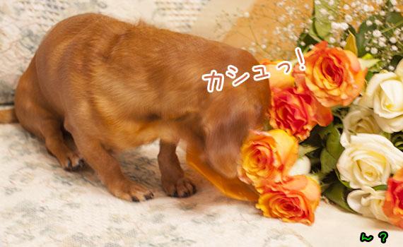 Akane04_06