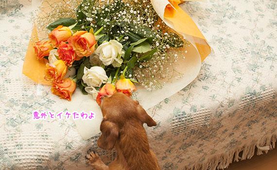 Akane06_06